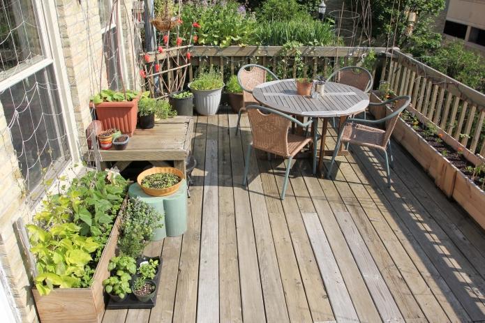 My patio garden